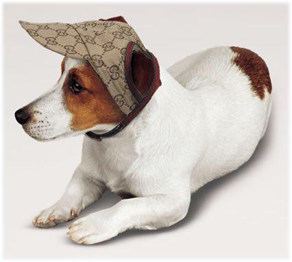 Los mejores complementos para los perros