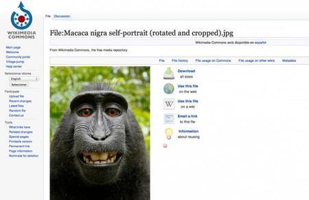 macaco-2.jpg