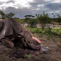 Ésta es la trágica imagen ganadora de Wildlife Photographer of the Year de 2017