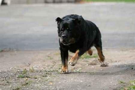 Qué hacer si un perro nos quiere atacar cuando salimos a correr
