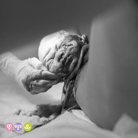 010 Head Born Fermont Fotografie