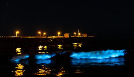 Bioluminiscencia Cameron