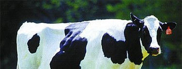 El mito de que la leche es mala para la salud (I)