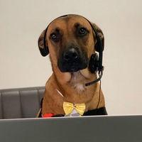 De perro callejero a asesor comercial en un concesionario de Hyundai: la historia de Tucson Prime