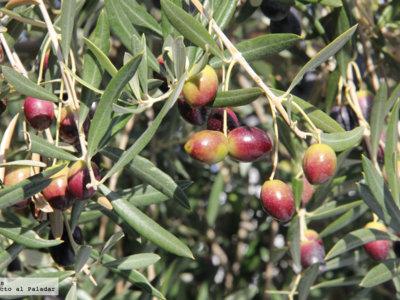 Olive Oil meeting point, aplicación móvil para el sector del aceite de oliva