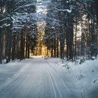 """El """"milagro"""" de la nieve: el desafío de predecir uno de los fenómenos meteorológicos más imprevisibles que existen"""