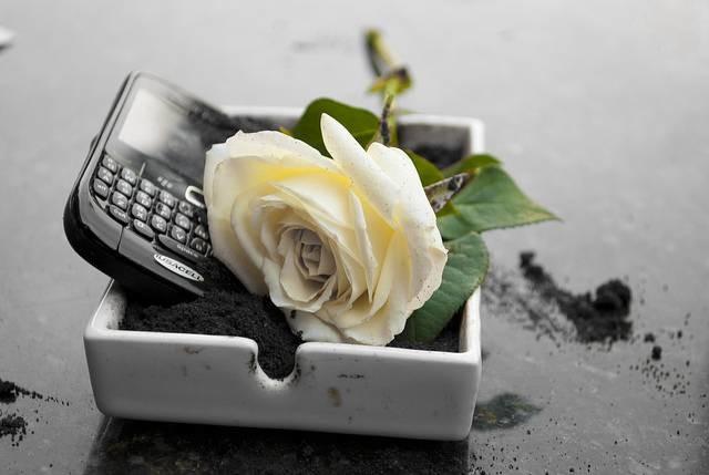 Blackberry Dead