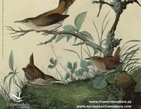 Llega FIO, la Feria Internacional de Turismo Ornitológico