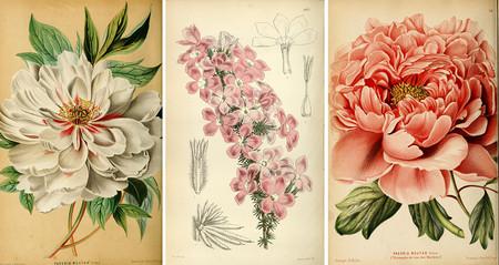 Las ilustraciones antiguas de botánica y animales son perfectas para decorar y esta biblioteca permite descargar más de 150.000 obras de forma gratuita
