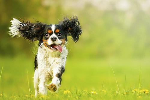 11 ofertas del día en productos para perros: cámara para perros Furbo y comedero portátil Lictin 4 en 1 rebajados