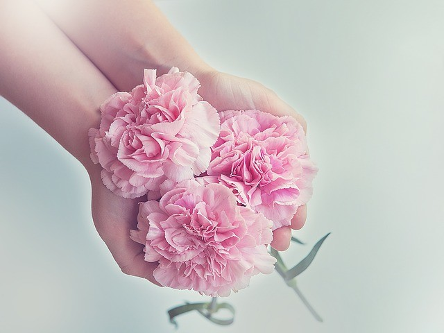 Manos con tres claveles rosa.