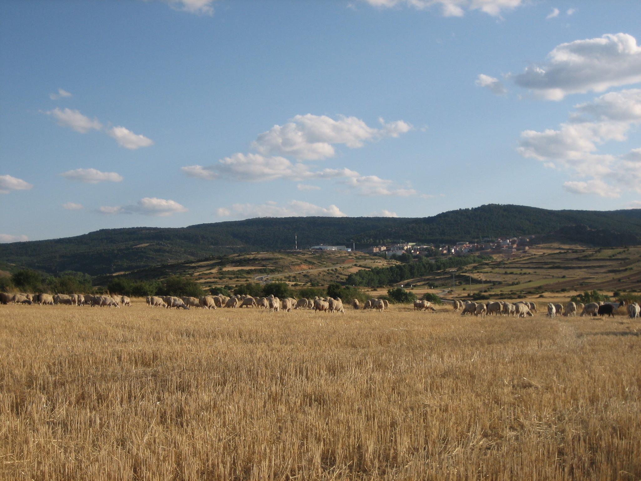 Foto de Sierra de Albarracín (13/35)