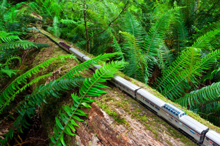 Train Cathedral Grove