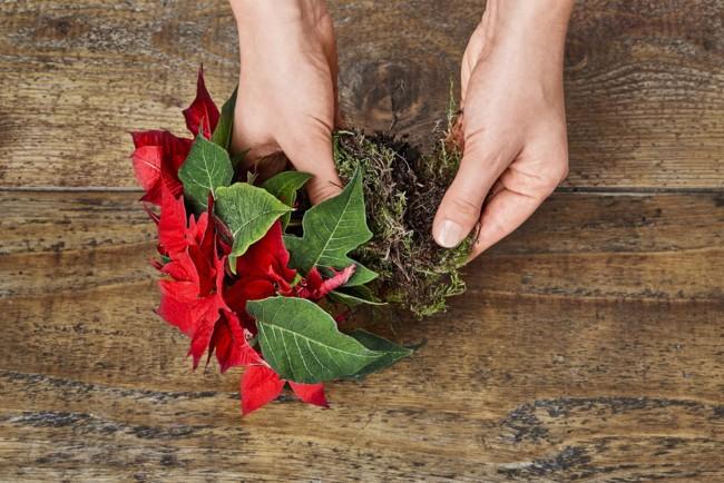 2015 Poinsettia Diy Decoracion Para Silla 02 Es