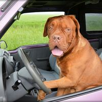 En busca del coche ideal para viajar con tu mascota: medidas mínimas y otras cuestiones que quizá no te habías planteado