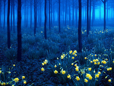 Beautiful Mysterious Forests 3 880