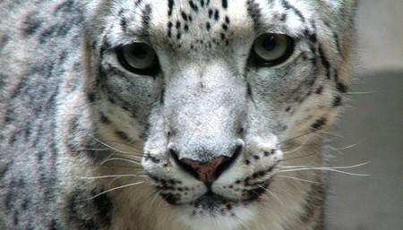 Nueva build de Snow Leopard: grabación de la pantalla y control desde el iPhone