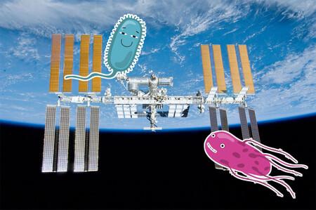 La Estación Espacial Internacional es un criadero de nuevas especies de bacterias candidatas a marcianas
