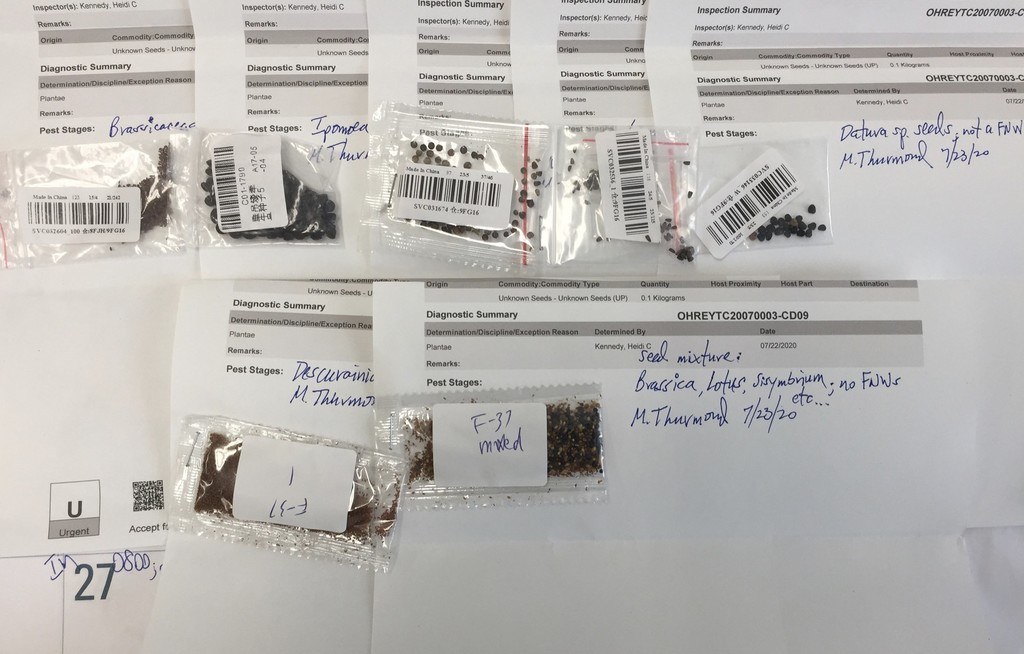 Hay quien está recibiendo paquetes de China no solicitados con semillas en el interior: qué hay detrás de esta práctica