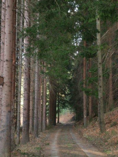 Lo que pasa cuando nos perdemos en el bosque