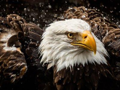 Cómo detectan fotografías manipuladas en National Geographic