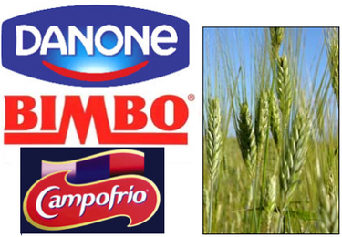 La subida del precio de los cereales provoca un notable aumento del coste de algunos productos alimentarios