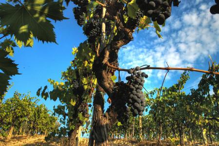 Tres vinos tintos italianos para tus pastas con carne