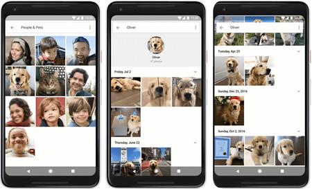 Google Fotos ya reconoce a tus mascotas para mostrarte todas sus fotos