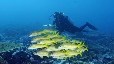 En menos de 50 años nos quedaremos sin pescado