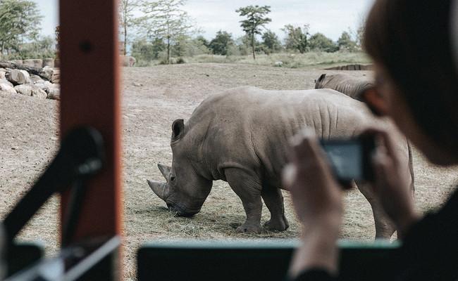 Elogio del zoo: por qué son esenciales para muchas especies y no una pesadilla animalista