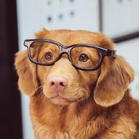 Adiós a la tabla del siete para calcular la edad de los perros: sus cinco años son nuestros 56