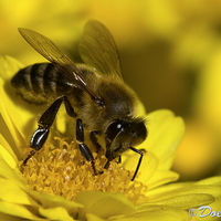 La gente suele preferir las abejas a las avispas, pero deberíamos reconsiderarlo