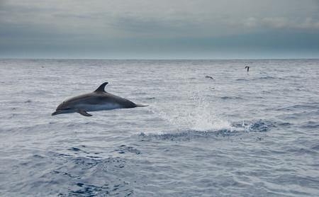 Cinco destinos inspiradores para ver de cerca delfines y ballenas en España
