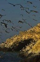 El día en que la escasez de caca de pájaro casi acaba con la humanidad