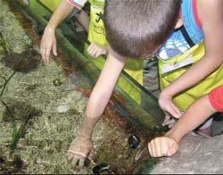 Talleres de verano para niños de Cosmocaixa