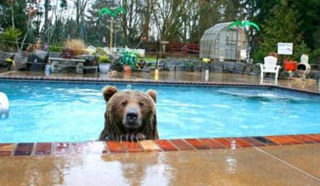 Pool Bear