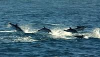Avistamiento de cetáceos en el Estrecho de Gibraltar