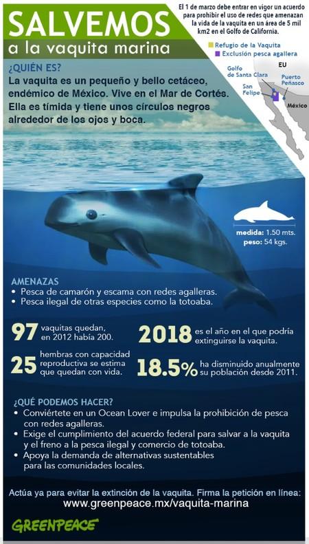Infografi A Final Perfil Vaquita
