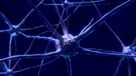 Neurales