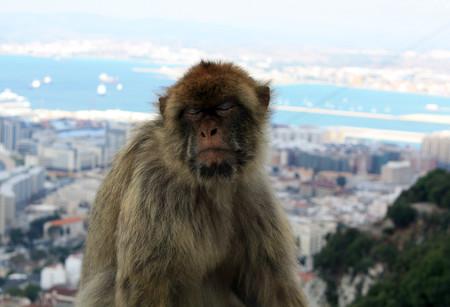 Gibraltar, conflicto económico en el Brexit