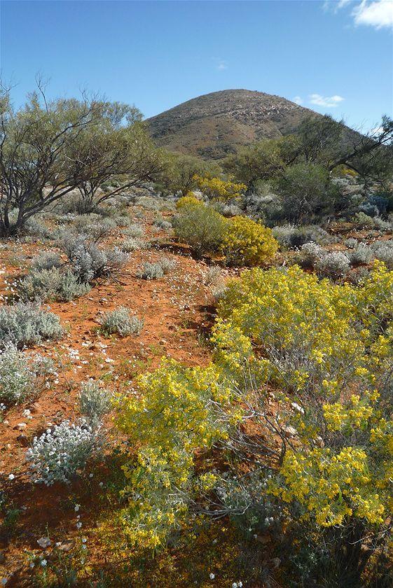 Foto de Colores del Gran Desierto de Victoria (20/22)