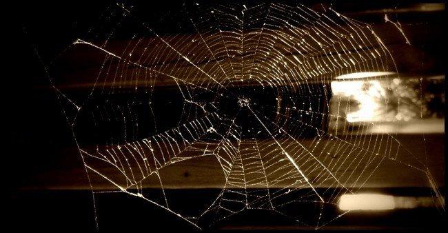 timbernerslee-web.jpg