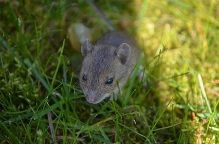 Un estudio sobre la sangre de ratones desvela que ésta puede rejuvenecer a los más viejos