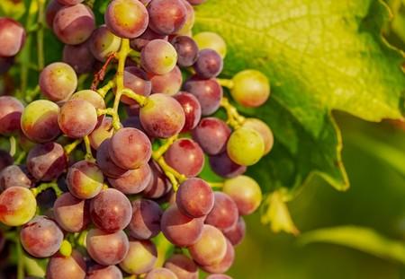 Grapes 3555214 1280