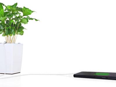 La phone-osíntesis de Bioo Lite: ¿es posible cargar el móvil con la energía que genera una planta?