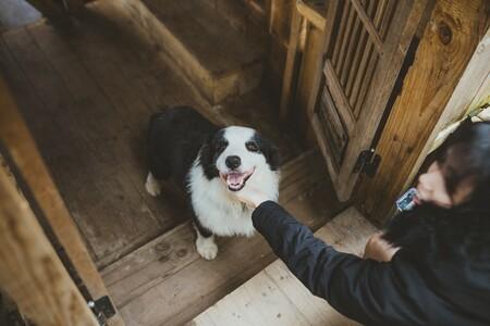 Los cinco indispensables para hogares con perros más vendidos de Amazon