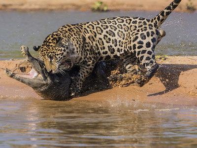 11 consejos prácticos para mejorar nuestra fotografía de fauna salvaje