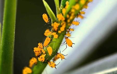 En Campeche, México, están usando insectos para acabar con... otra plaga de insectos