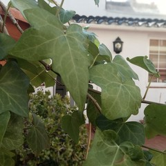 Foto 2 de 24 de la galería fotos-ulefone-gemini-pro en Xataka Android