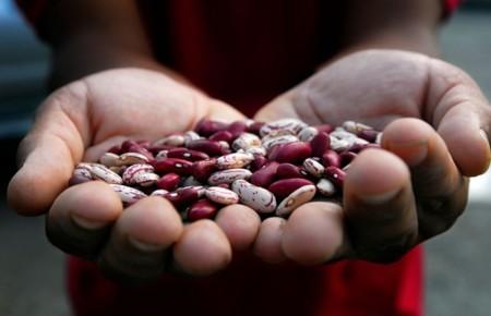 En busca de la judía que alimentará al mundo los próximos 100 años
